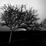 IMG#12133|017 - ThE Lonely Tree