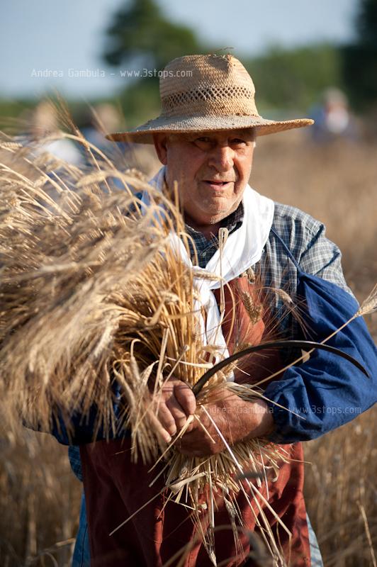 Turri, mietitura grano